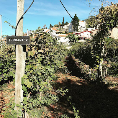 A wine odyssey in Madeira