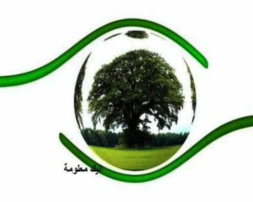 بحث حول الشراء الأخضر