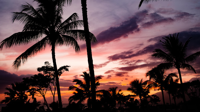 Wallpaper: Tropical View
