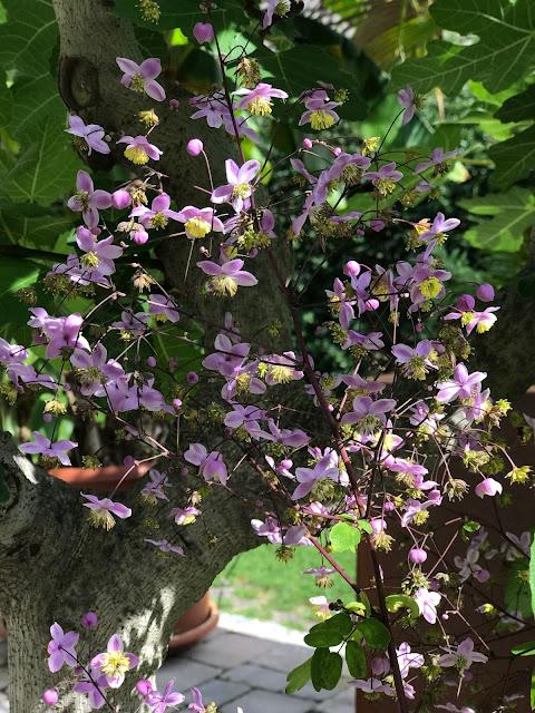Achimsgarten Der Selbstversorger Und Garten Blog Page 17 Chan