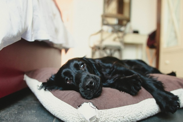 Tips for staying in a hotel with your dog