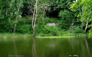 http://fotobabij.blogspot.com/2016/03/acha-wislana-grazele-uschniete-drzewo.html