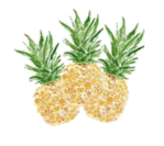 White Background of 3 Hand Drawn Pineapples