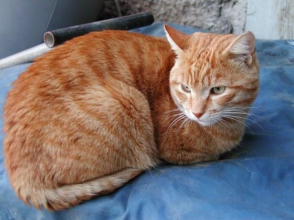 dating ιστοσελίδα για τους λάτρεις της γάτας που χρονολογείται από το 2ο έτος που κατοικεί