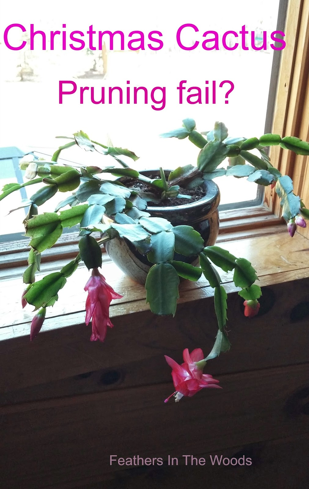 Potting Soil For Christmas Cactus
