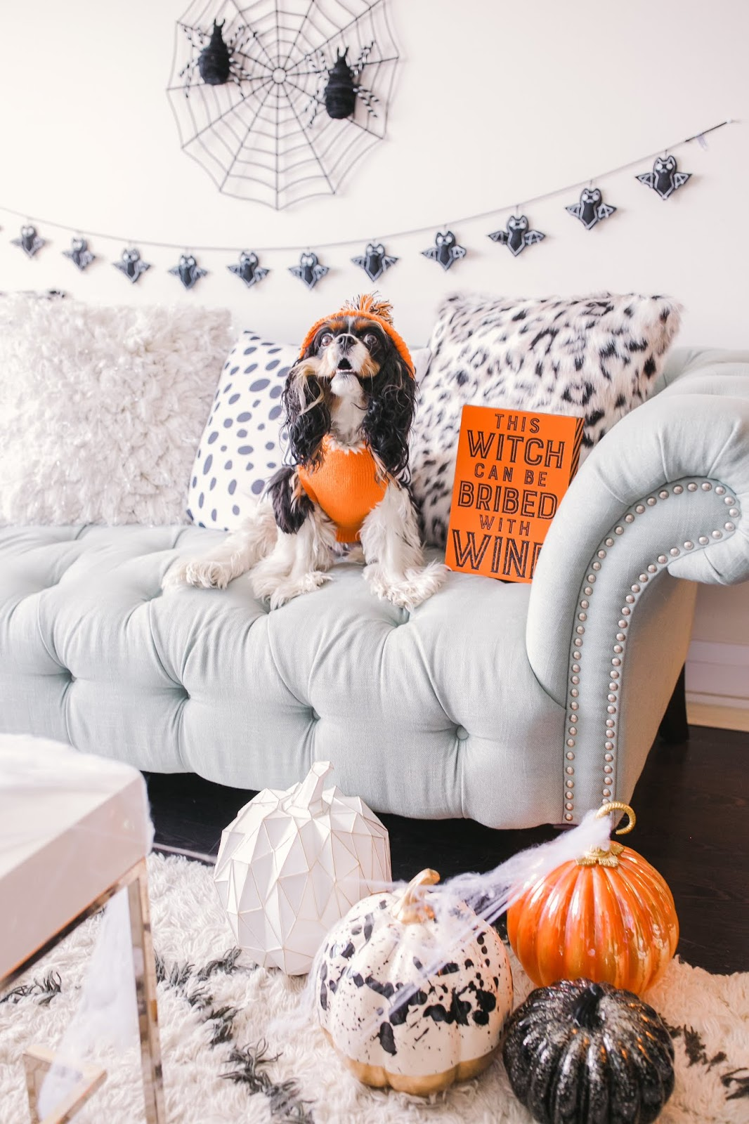 Bijuleni - How to Decorate Your Living Room for Halloween - Cavalier King Charles Spaniel puppy dressed up for Halloween