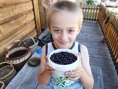 Orawa, borówki, jagody, zbieranie borówek