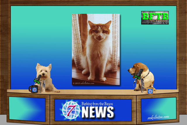 BFTB NETWoof News with two dogs reporting