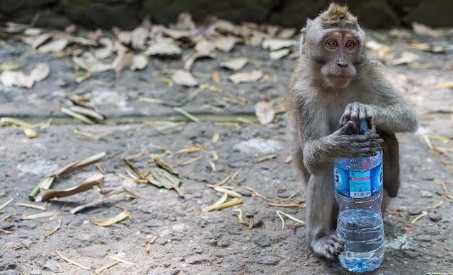 Ubud Monkey Forest (Ubud)