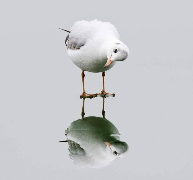 Funny Bird Reflection Picture