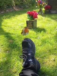 سبحان الله ماذا فعل هذا الطائر الصغير عندما زارت امرأة قبر ابنها