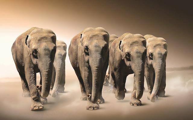 Afbeelding met kudde olifanten