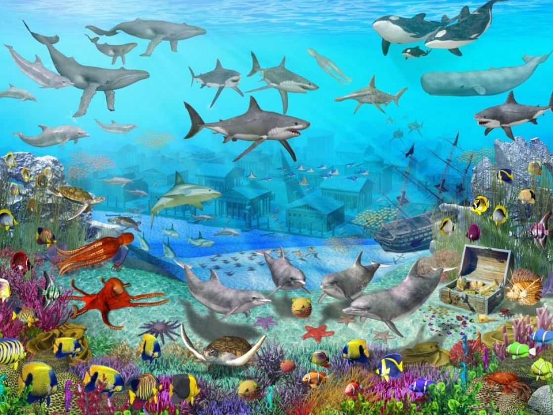 Oceans Sea Life Desktop Backgrounds Free