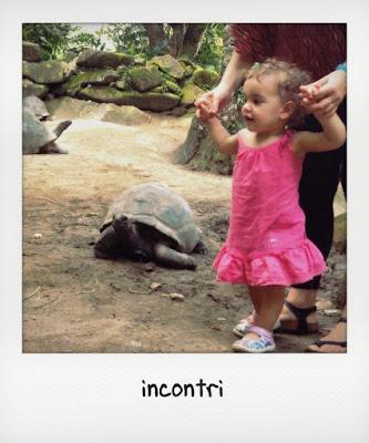 Bambina di un anno e mezzo e tartaruga gigante delle Seychelles