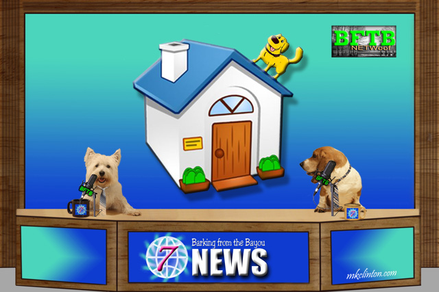 BFTB NETWoof News with dog on roof