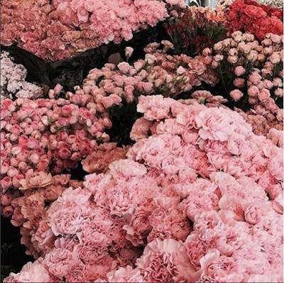 Chelsea Flower Show 2017 pink flowers via belle vivir blog