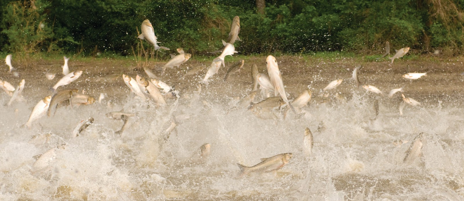Asian carp lawsuit date filed apologise, but