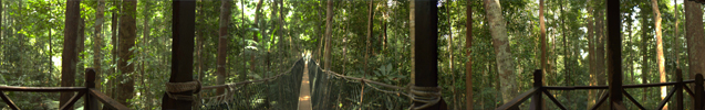 le Canopy Walkway à Taman Negara