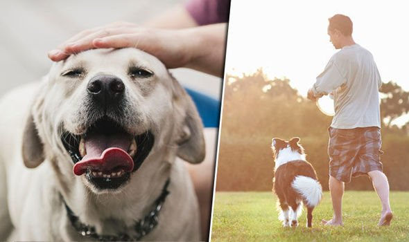 Owning A Dog Allows You To Live Longer, According To Scientists