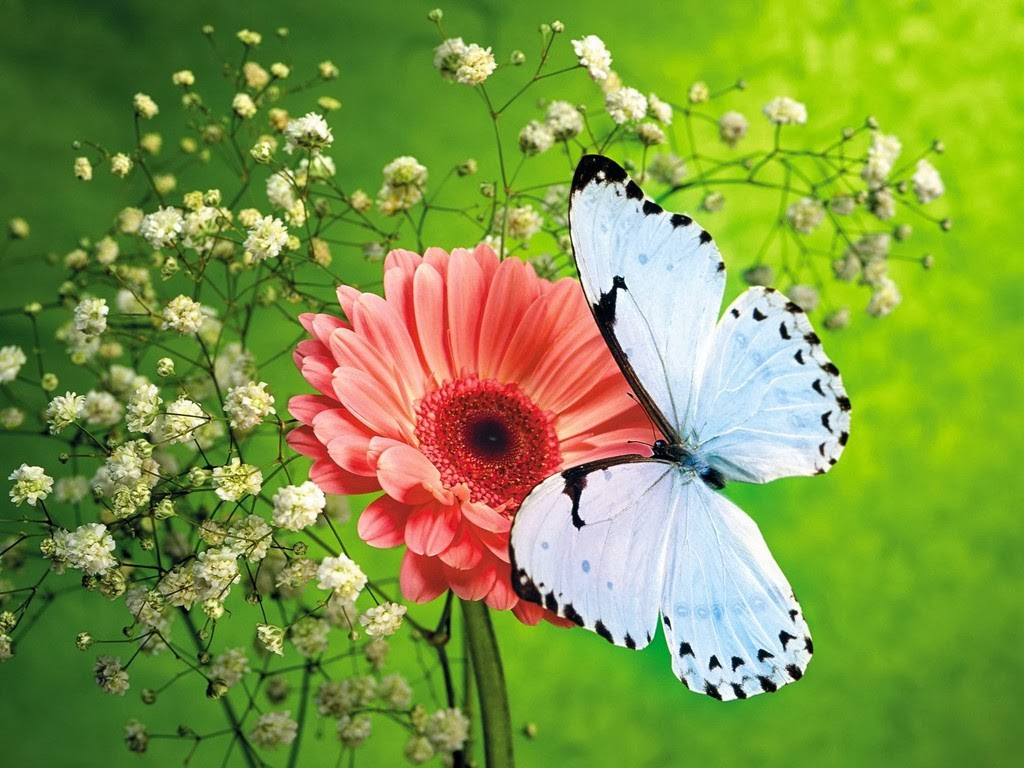 Beautiful Flowers With Butterfly Wallpapers