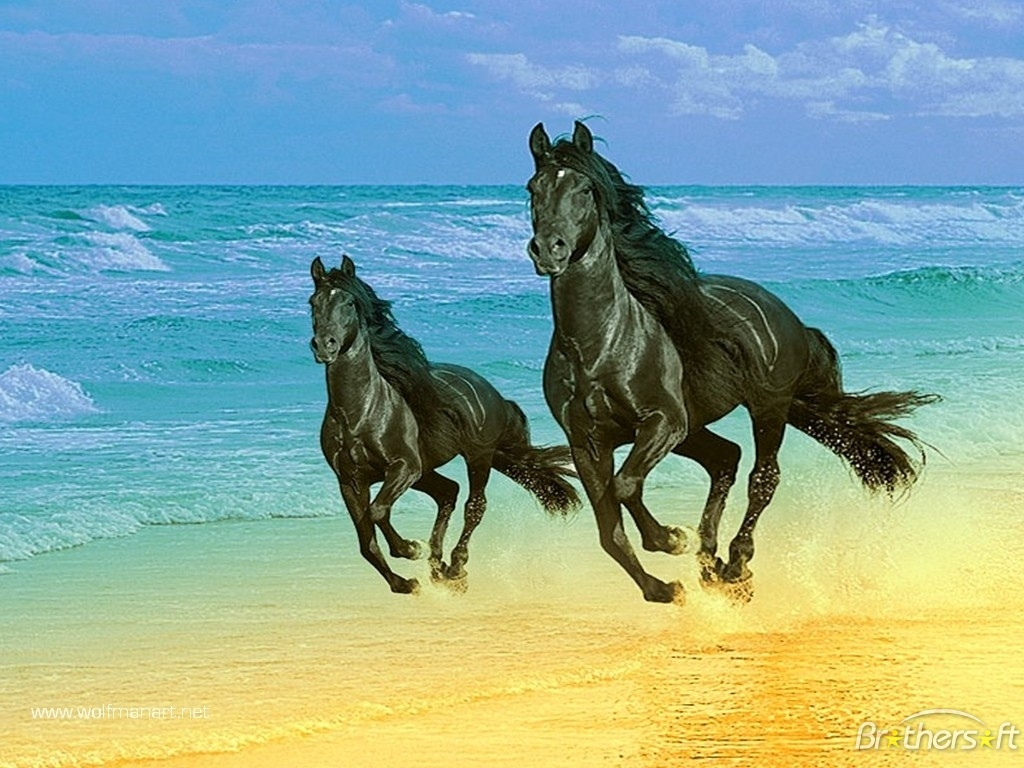 Encyclopedia: Horse Running - photo#37