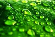 Hubungan Kelembapan Udara dengan Air dan Transpirasi Tanaman