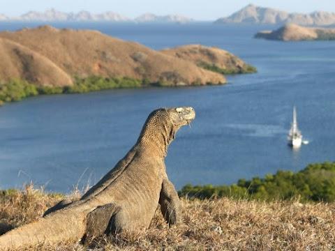 Egy évre lezárhatják a Komodo-szigetet a turisták előtt