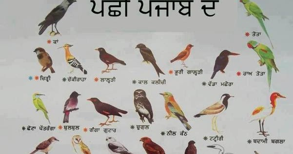 Birds name english to punjabi