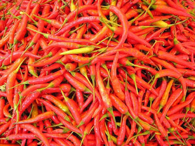 Peluang Usaha Sayuran Cabe Keriting Merah