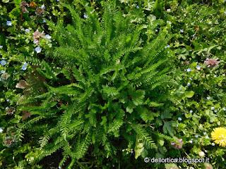 erbe spontanee officinali aromatiche rose orto e altro ancora nel giardino della fattoria didattica a Bologna in Appennino Savigno Valsamoggia vicino Zocca