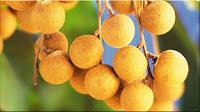 gambar buah lengkeng, bahasa arab kelengkeng