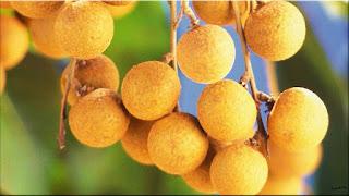 gambar buah kelengkeng