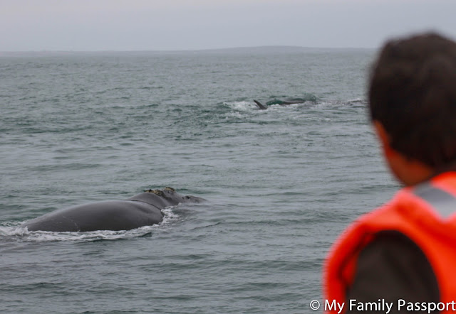 ballenas sudafrica