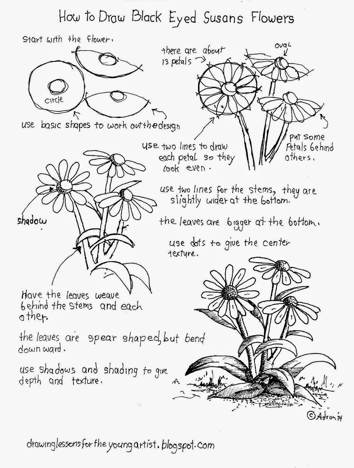 Flower Drawings To Draw And How To Draw