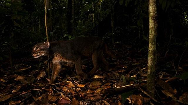 Mitos yang Berlaku di Hutan Kalimantan