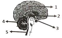 soal un biologi tentang sistem saraf