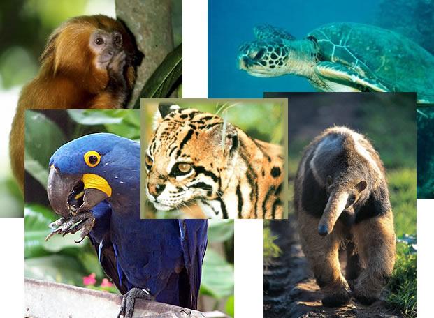 Análise Sobre a Extinção das Espécies