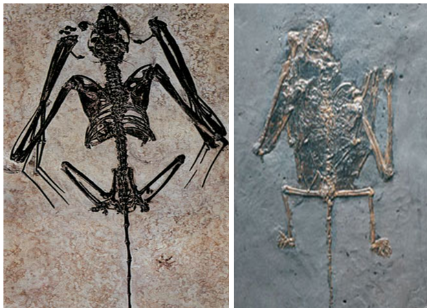 Makalah Teori Evolusi Kelelawar