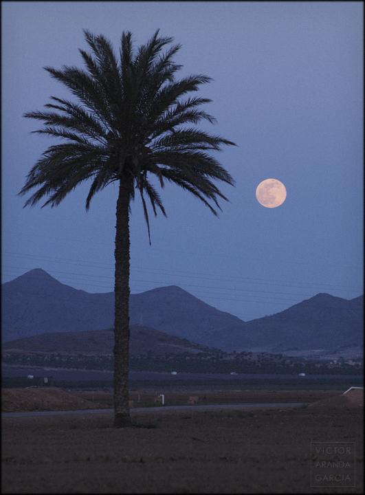 fotografía, luna, paisaje, Murcia, naturaleza, Fuente Álamo, palmera