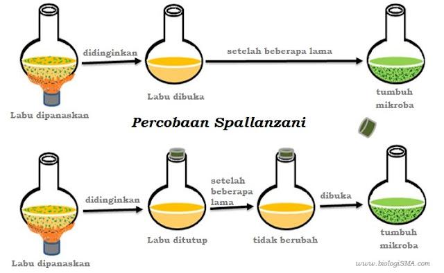 percobaan Spallanzani