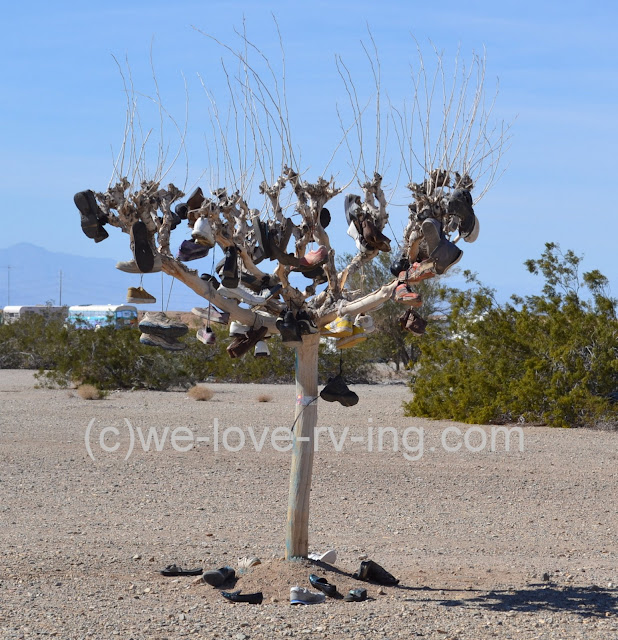 All kinds of shoes are hanging from a tree on the road leading into Slab City