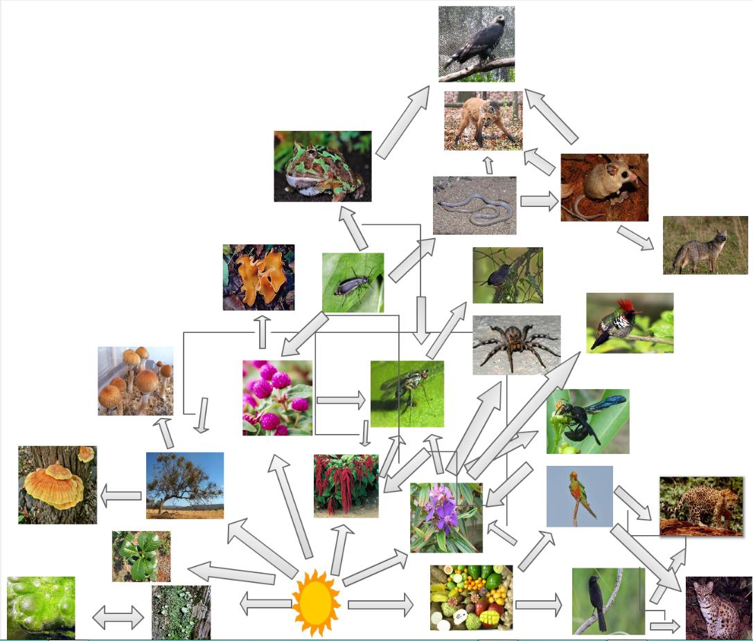 predator prey relationship in the grassland biome description