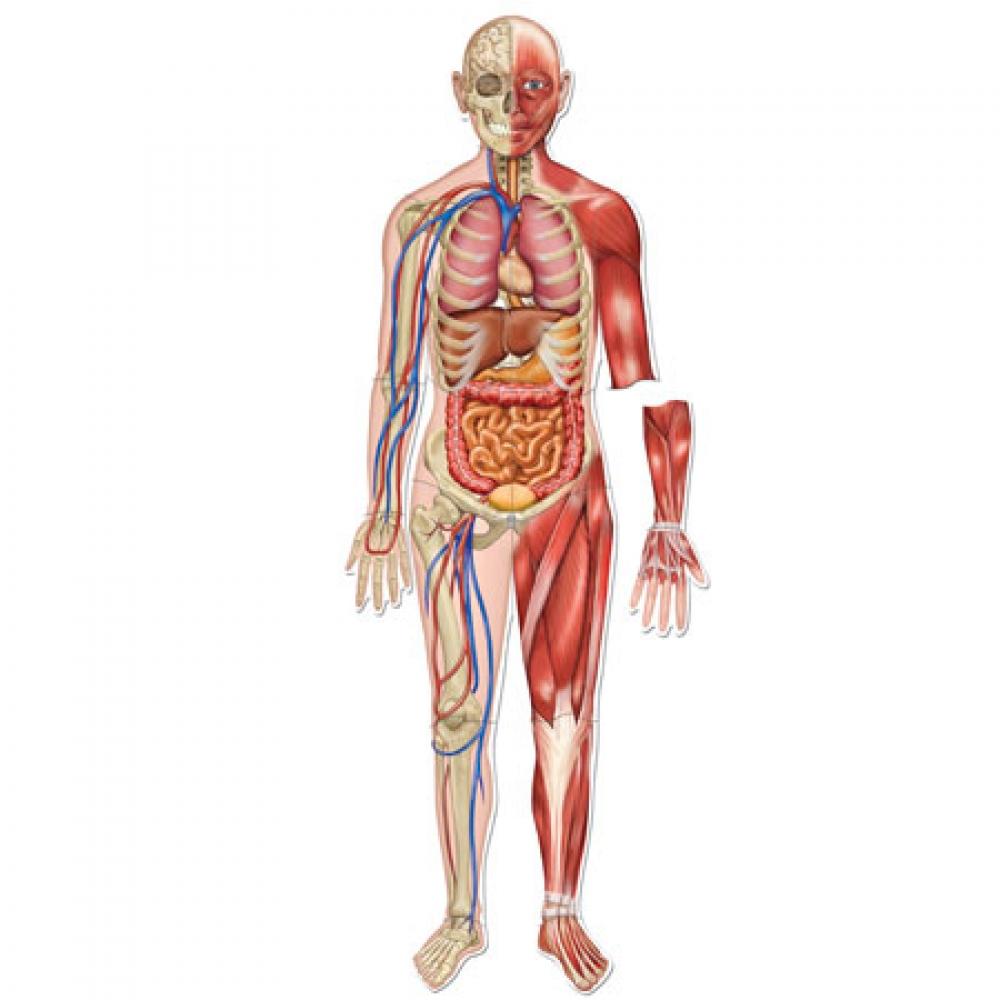 LibbyLangranA2Photography: Diagrams of the human body