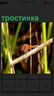 По маленькой тростинке ползет стрекоза, перебирая лапками и держа свои крылья