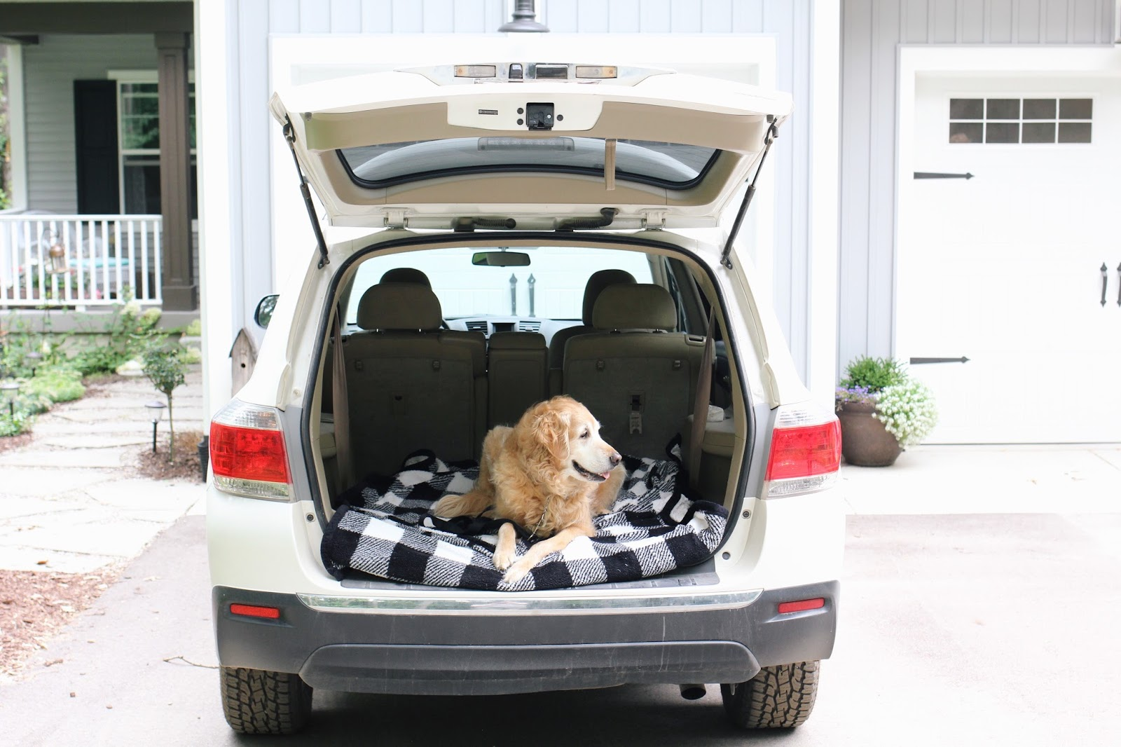 7 Tips for Traveling with Your Dog