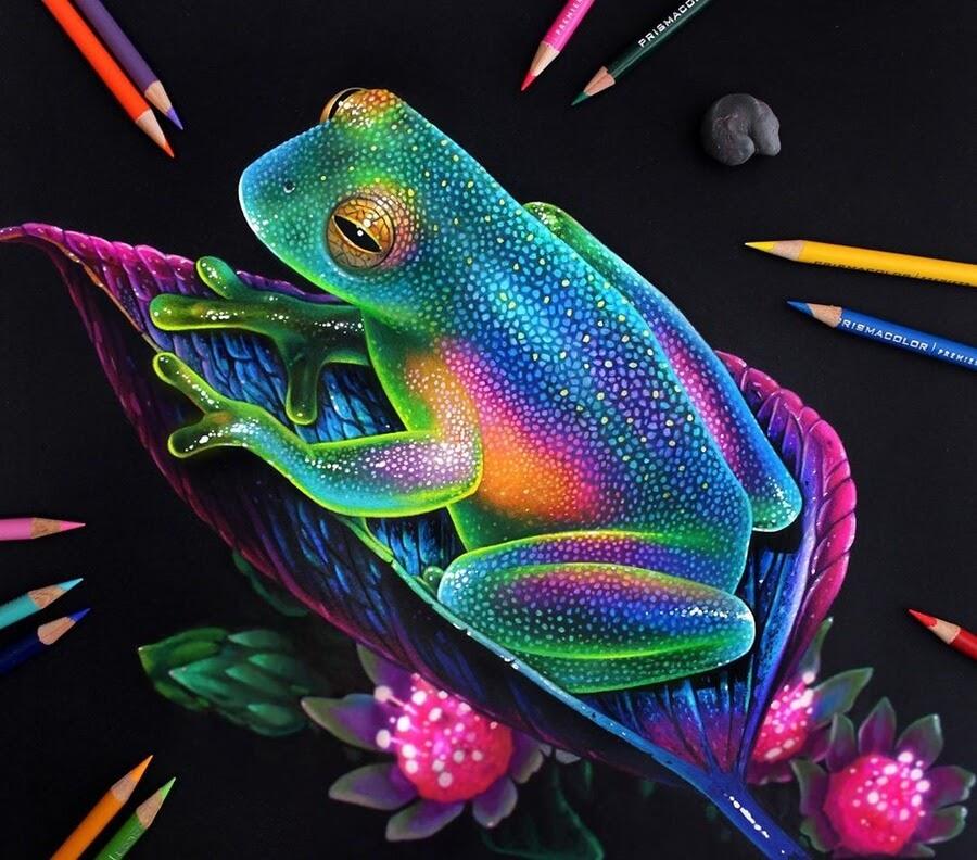 02-Frog-Animal-Drawings-www-designstack-co
