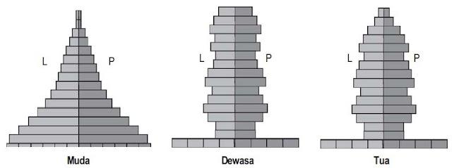 Tiga Jenis Bentuk Piramida Penduduk
