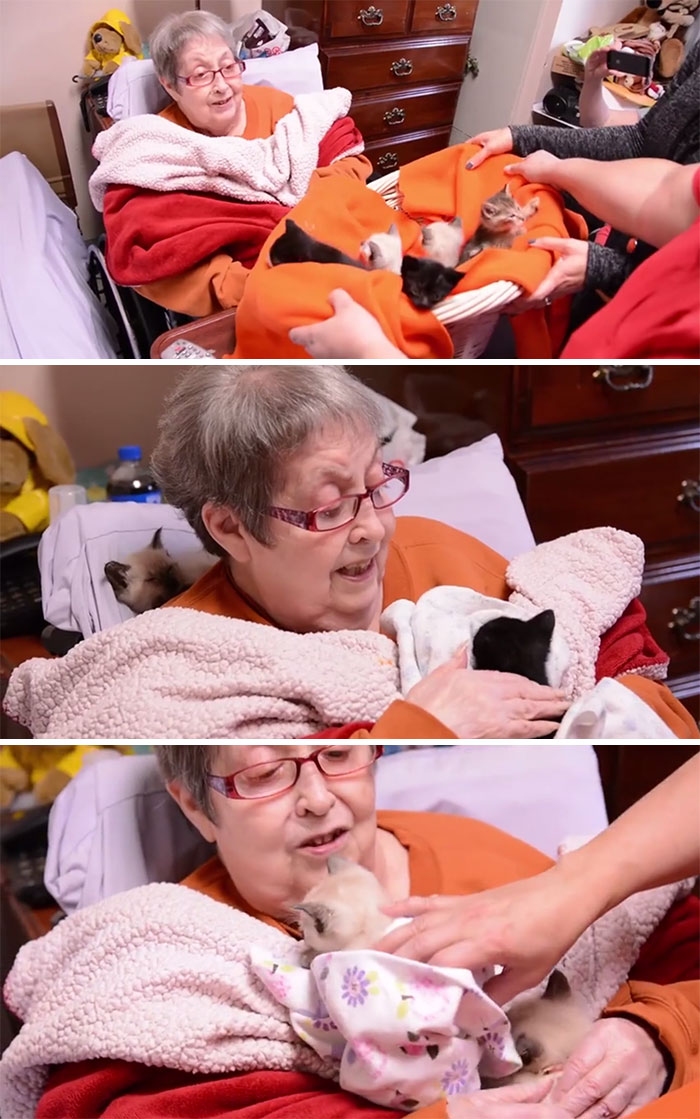 36 People's Heart-Breaking Last Wishes - Hospice Patient Receives Dying Wish To Snuggle Some Kittens
