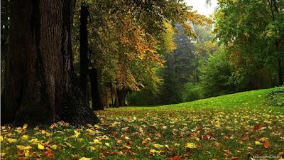 Orman manzaras - İçimdeki Evren: SU ve TUZ..