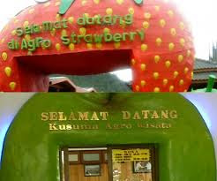 akcayatour, Kusuma Agrowisata, Travel Malang Juanda, Travel Juanda Malang, Wisata Malang, gambar 1